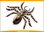 tarantula cards