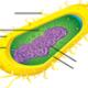 bacteria-diagram