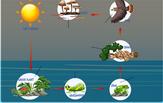 food-chain-diagram