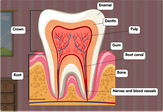 tooth-diagram